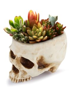 Totenkopf Blumentopf kaufen Schweiz